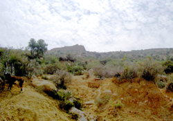 goat herder, Agadir countryside