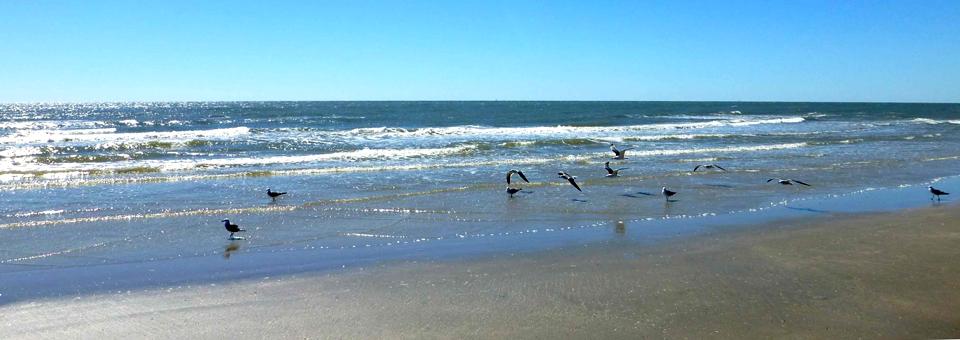 Seabirds on the Gulf, Galveston, Texas