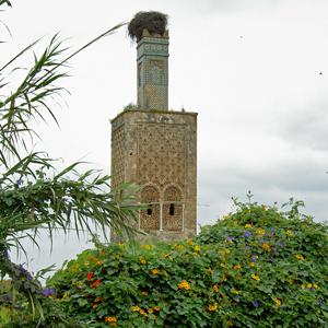 Chellah tower with stork nest, Rabat