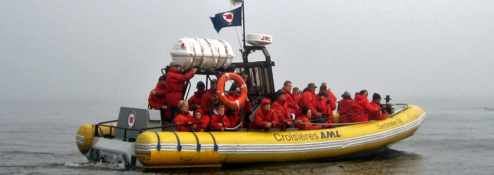 Croisières whale watch