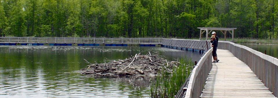walkway to beaver habitat in the Parc national de Plaisance