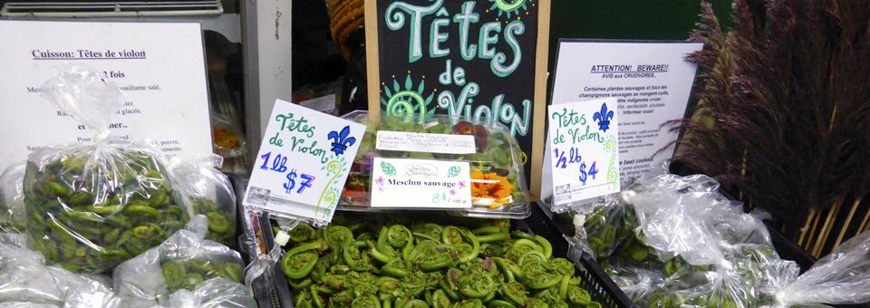 têtes de violon at Jean-Talon Market