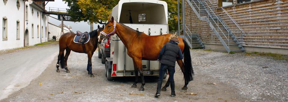 horses at the Benedictine Monastery Einseideln