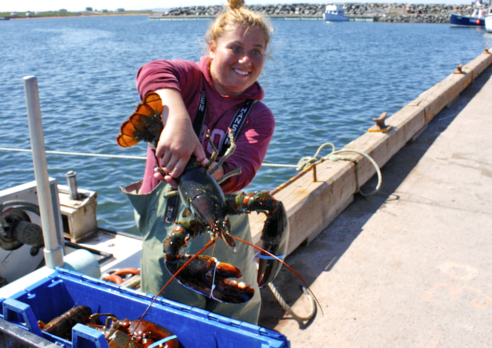 lobster catch in the Magdalen Islands