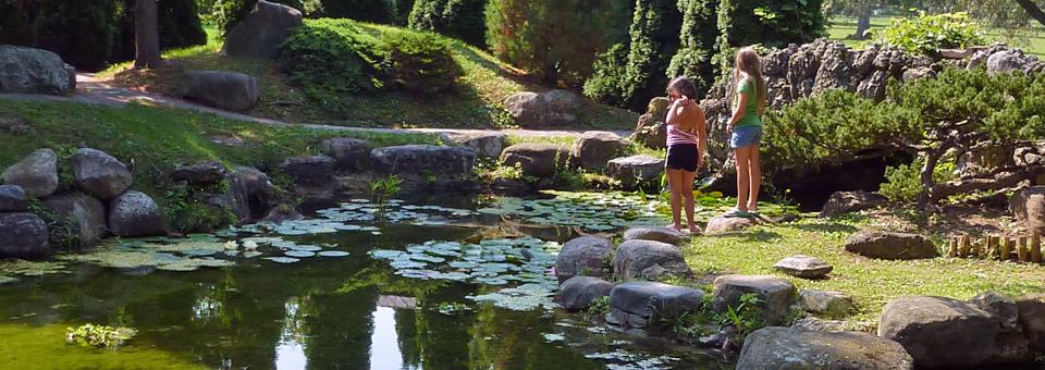 Lily pond, Sonnenberg Gardens, Finger Lakes, New York
