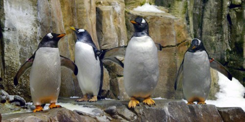 penguins in the Biodome, Montreal, Canada