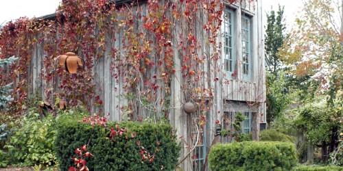 jellies, Tangled Garden, Grand Pré. Nova Scotia