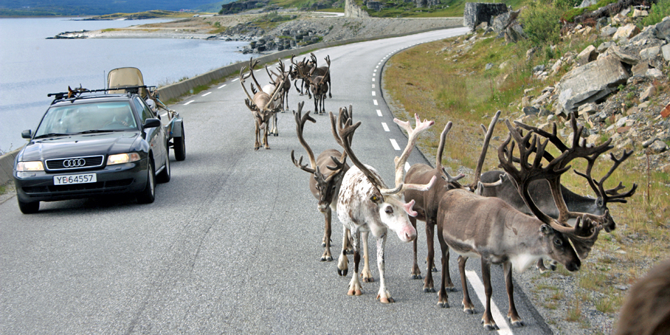 Arctic traffic jam, Norway with Hurtigruten