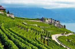 The Swiss Lavaux region: A votre sante!