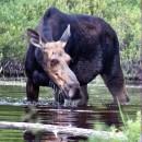 Reflections on Moosehead Lake