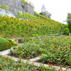 rose garden, Rapperswil, Switzerland