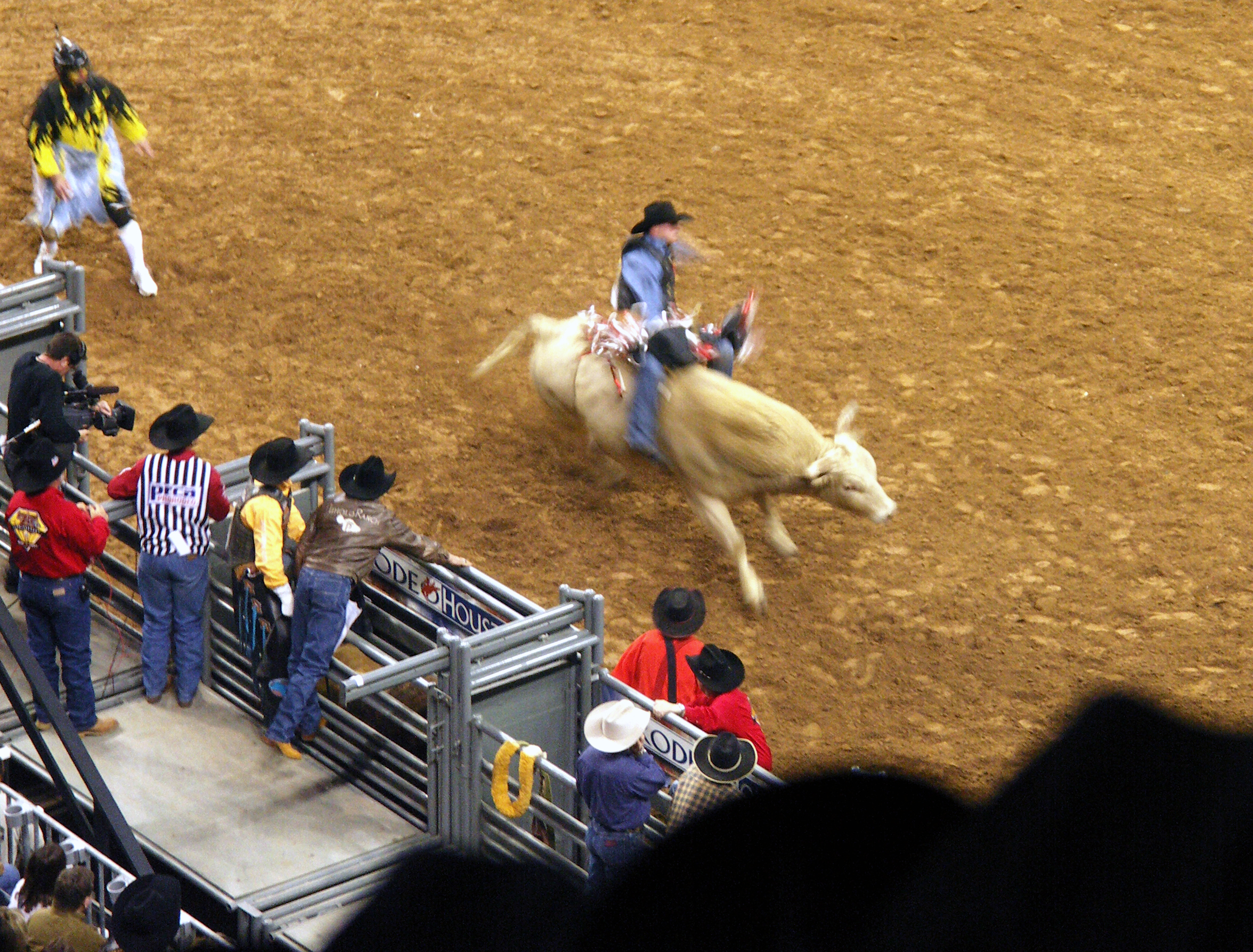 Houston Livestock Sow and Rodeo, Texas