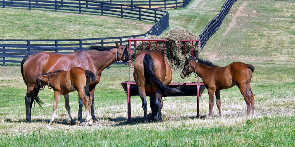The Bluegrass region of Kentucky is the Horse Capital of the World.