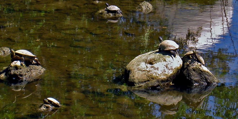 Turtles were among those enjoying the sunshine along Austin's Hike and Bike Trail on Lady Bird Lake.