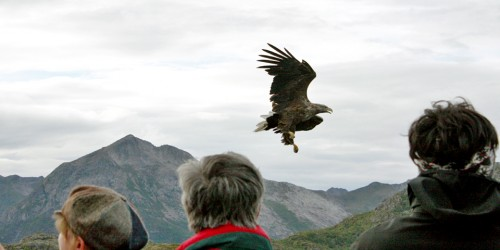 An eagle safari was part of our Hurtigruten cruise in Norway.