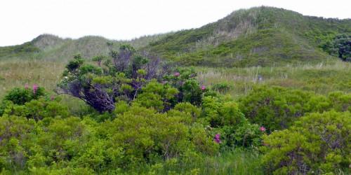 dunes at Mavillette Beach Provincial Park, Nova Scotia