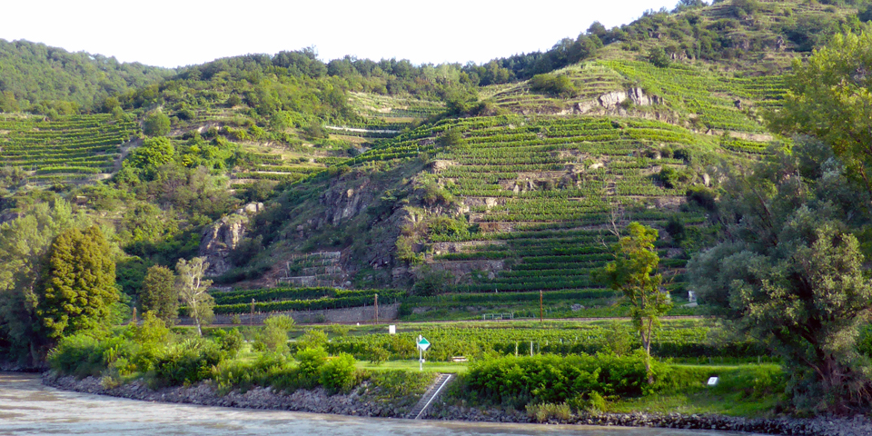terraced vineyards along the Wachau Valley of the Danube
