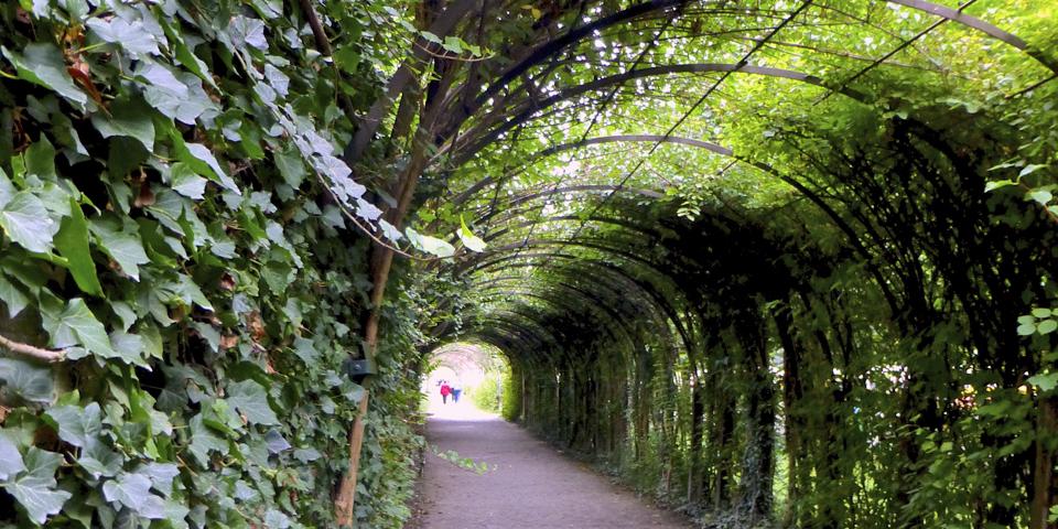 tunnel of hedges, Mirabell Gardens, Salzburg, Austria