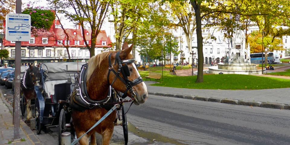 calèche tours, Quebec City