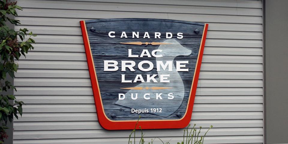 Canards Lac Brome, Brome Lake Ducks, Eastern Townships, Québec, Canada