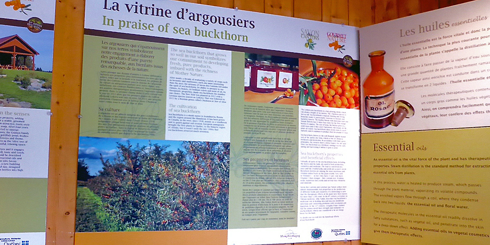 buckthorn poster, Savons des Cantons, Eastern Townships, Québec, Canada