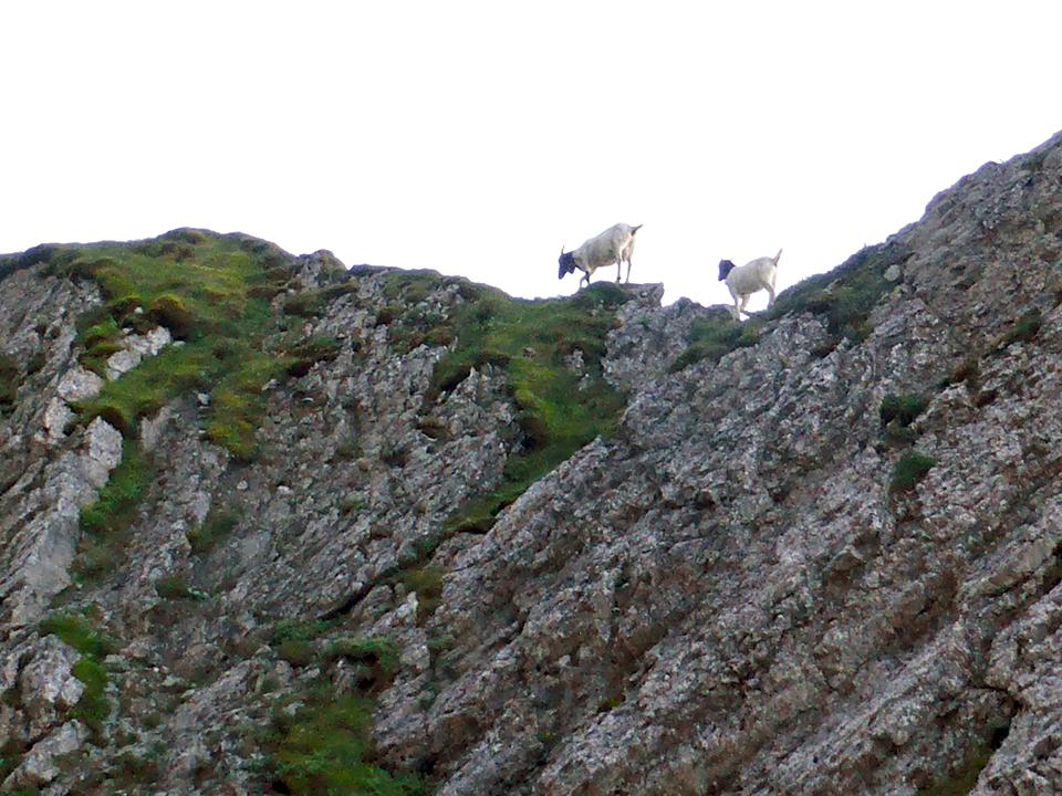 mountain goats, Mt. Pilatus