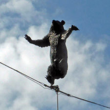bear on a wire at Bear Pits, Bern, Switzerland