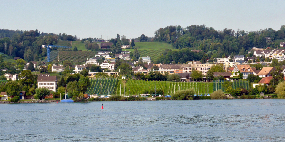 vineyards along Lake Zurich
