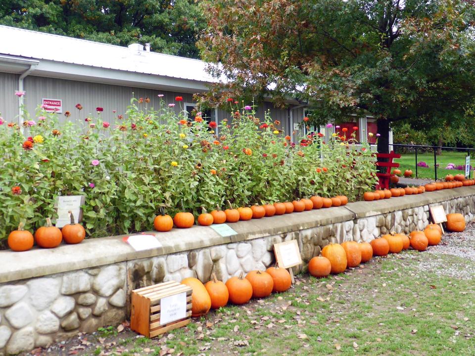 pumpkins, Reisinger's, Watkins Glen, NY