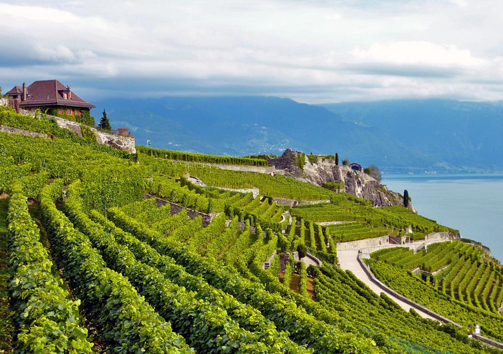 Lavaux slope, Switzerland