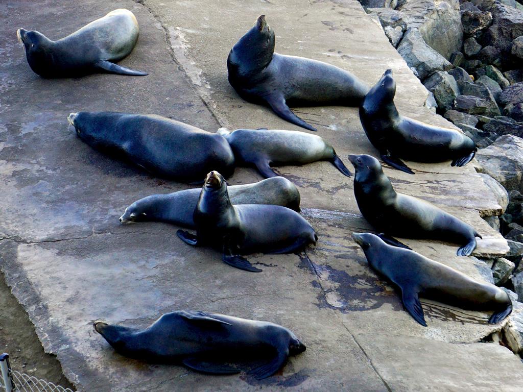 sea lions, Eurodam, Ensenada, Mexico