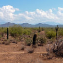 Cactus Country: travel in these thorny times